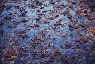 沼の中の落ち葉 - No.957101