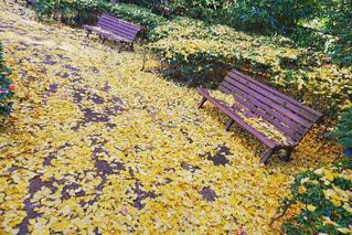 落ち葉の写真・画像素材[969248]