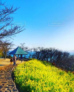 菜の花畑 - No.1026527