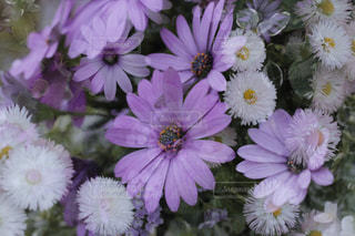 近くの花のアップの写真・画像素材[954488]