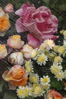 近くの花のアップの写真・画像素材[954491]