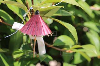 傘の写真・画像素材[955945]