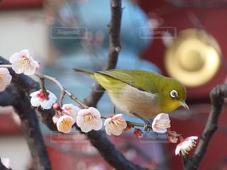 枝の上に座って鳥の写真・画像素材[956348]