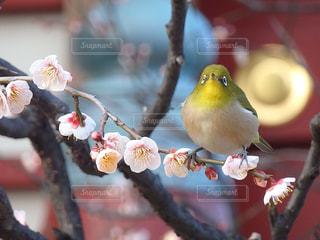 木の枝にとまる小鳥の写真・画像素材[956349]