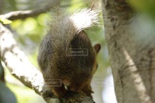 近くの枝にリスのアップの写真・画像素材[966015]