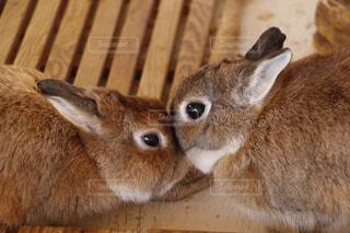 近くに動物のアップの写真・画像素材[966017]