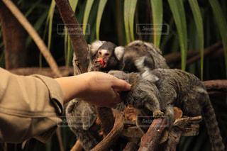 木の猿の写真・画像素材[971453]