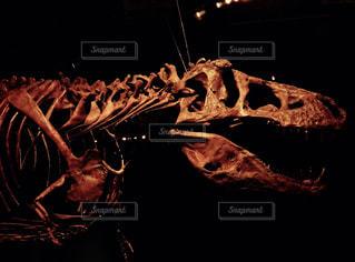 恐竜の写真・画像素材[2269682]