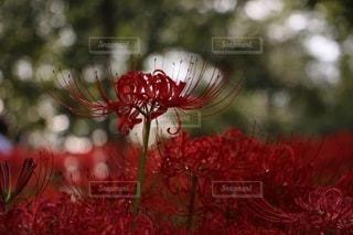 花のクローズアップの写真・画像素材[3641186]