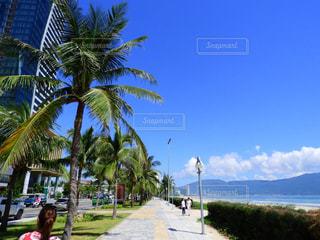 ベトナムダナンのビーチの写真・画像素材[954669]
