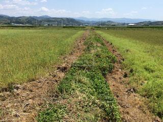 畑の畦道に現れた断層の写真・画像素材[954748]