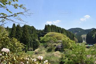 緑豊かな緑の森の上に羊立っての群れの写真・画像素材[1154362]