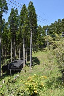 緑豊かな森の鉄道の写真・画像素材[1154363]