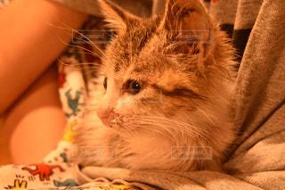 ベッドの上に座っている猫の写真・画像素材[1288495]