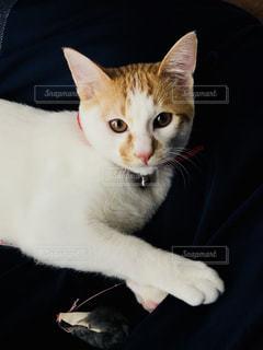 その口を開いて白猫の写真・画像素材[995525]