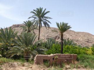 砂漠のオアシスの写真・画像素材[958106]