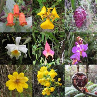 マチュピチュに咲く花の写真・画像素材[1135109]