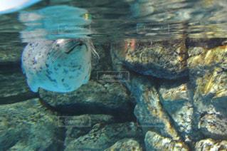 水の動物の写真・画像素材[955220]