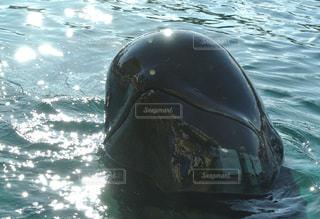 水中を泳ぐ動物の写真・画像素材[955224]