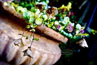 近くの花のアップの写真・画像素材[967346]