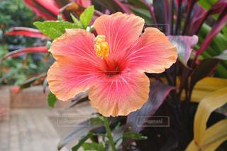 花の写真・画像素材[2043081]
