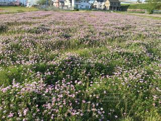花の写真・画像素材[557570]