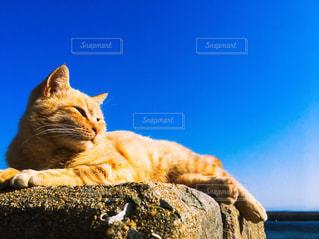 青い空とネコの写真・画像素材[1847092]