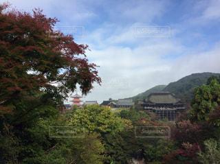 背景の山と木の写真・画像素材[955729]