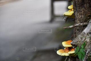 パン1枚の写真・画像素材[2342039]
