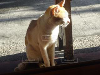 車の上に座っている猫の写真・画像素材[2379896]