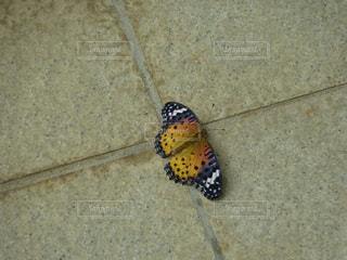 地面に昆虫の写真・画像素材[2379945]