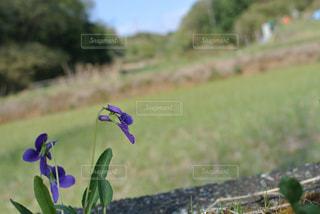 緑の野原のクローズアップの写真・画像素材[2379958]