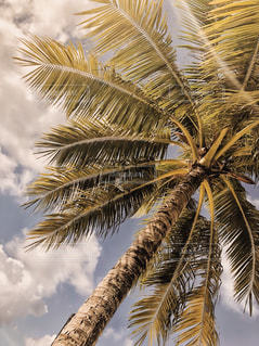 ヤシの木の写真・画像素材[1131779]