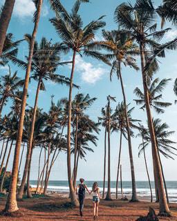 ヤシの木のあるビーチの写真・画像素材[2454722]