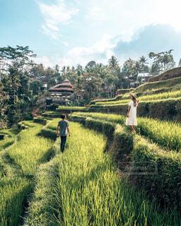 インドネシアの写真・画像素材[2733296]