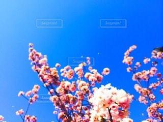 自然の写真・画像素材[35479]