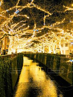 冬の夜空に輝く宝石 - No.956643
