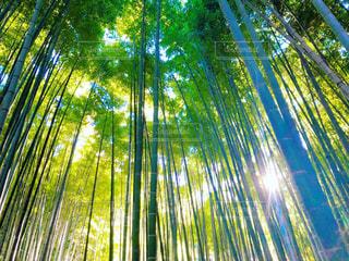 竹林と木漏れ日 - No.956644