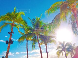 ハワイの青空とヤシの木の写真・画像素材[1533580]