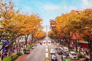 表参道にも秋がやってきたの写真・画像素材[1600925]