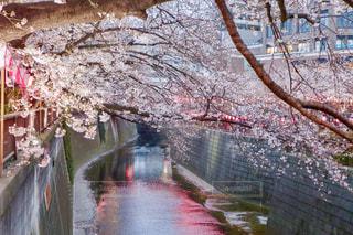 ピンクな季節の写真・画像素材[1879464]