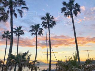 ヤシの木とビーチの写真・画像素材[2081784]