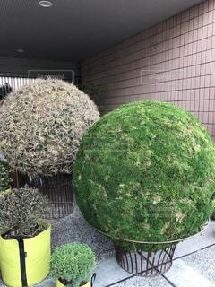 庭園の緑の植物の写真・画像素材[956539]