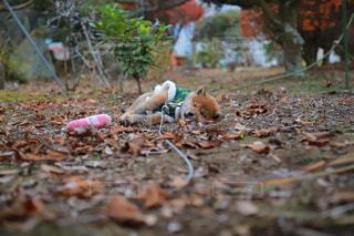 汚れフィールドの上に座っているぬいぐるみの動物のグループの写真・画像素材[956849]