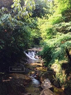 森林浴の写真・画像素材[962317]
