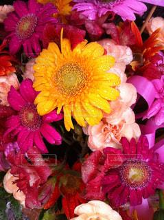 花の写真・画像素材[957737]