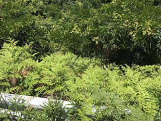 森の中の緑の植物 - No.985196