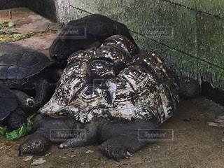 亀のケツの写真・画像素材[957549]