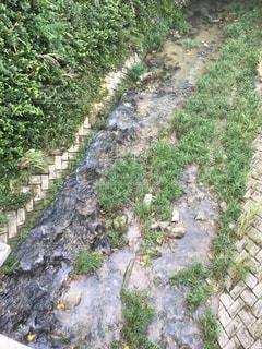 沖縄の川の写真・画像素材[957573]