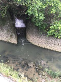 沖縄の汚い川 かふんじゃーの写真・画像素材[957574]